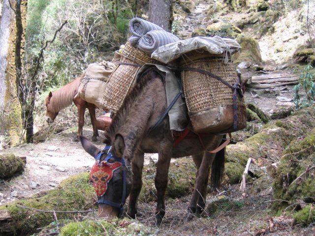 Trekking Horses